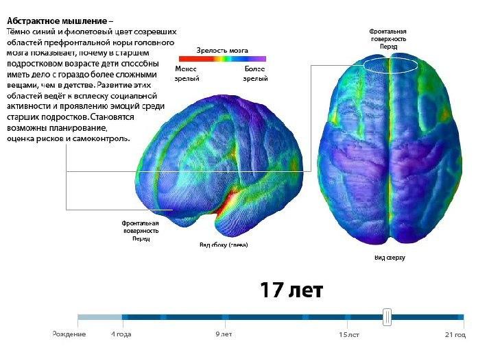 Мозг в 17 лет